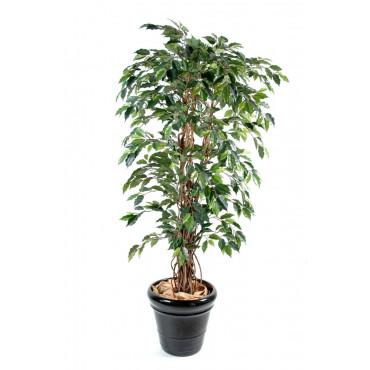 Ficus Lianes Grandes Feuilles Semi-Naturel Vert