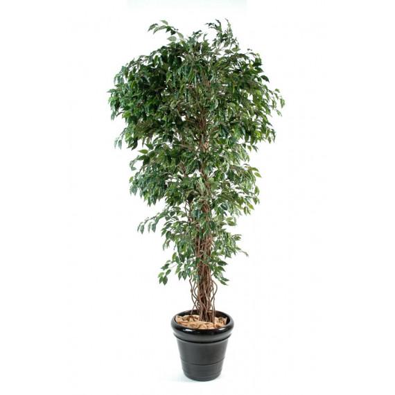 Ficus Lianes Petites Feuilles Semi-Naturel Vert