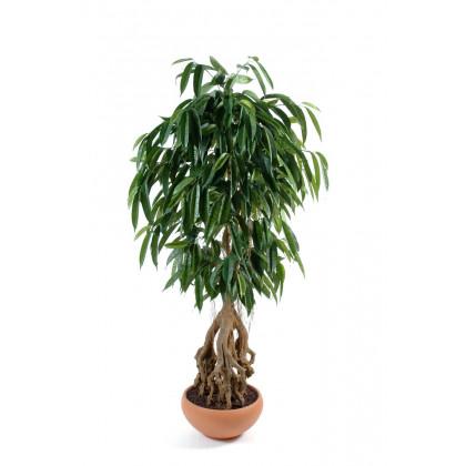 Ficus Longifolia Racine Apparente Artificiel