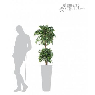 Ficus Double Boule Semi-Naturel 150 cm