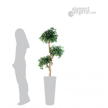 Ficus Retusa Semi-Naturel 150 cm