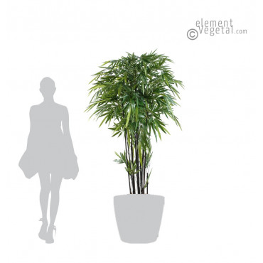 Bambou Noir Semi-naturel 210 cm